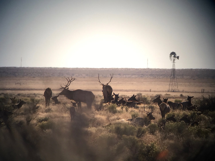 Wildlife-protection-Socorro-County